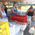 """Egy héttel ezelőtt ismét kis településeken jártunk, Szentdomonkoson, Tarnaleleszen és Mezőkövesden összesen 650 adag ételt osztottunk szét """"Mint egy falat kenyér"""" vidéki ételosztó programunk keretében. A meleg ebéd mellé friss […]"""